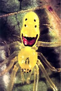 aranha sorridente