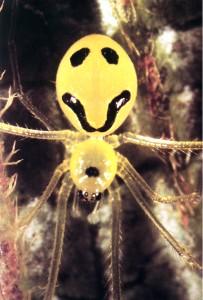 aranha com sorriso