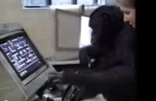 chimpanze joga pacman