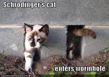 gato minhoca