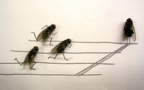 moscas corrida