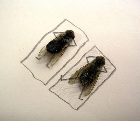 moscas banho de sol