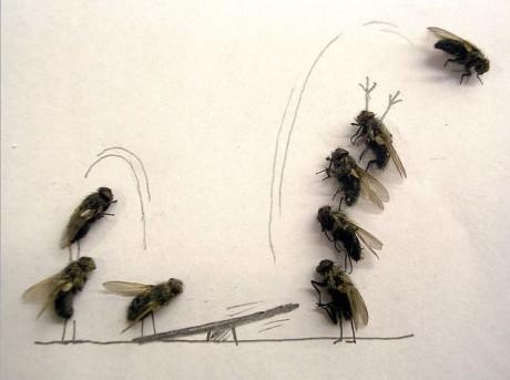 moscas circo