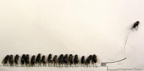 moscas fila