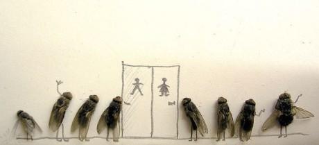 moscas banheiro