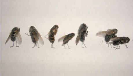 moscas Flychelangelo